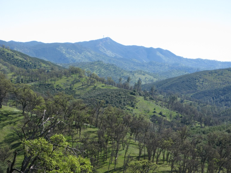 The hills above Zem Zem Creek with Mount Berryessa in the bacground